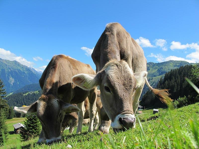 Consumo leche - Blog Unagras