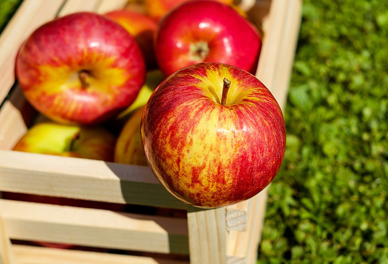 Cosecha frutas y verduras - Blog Unagras