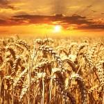 Precios alimentos cereales