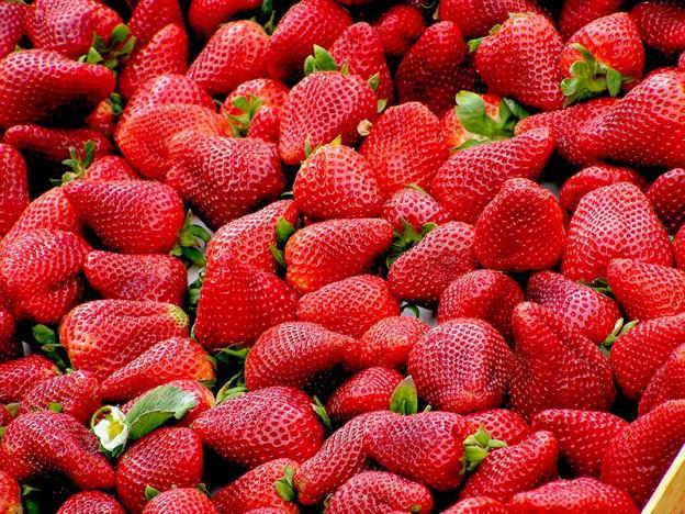 Campaña de fresa en Huelva