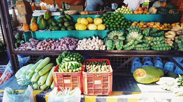 sano local y sostenible